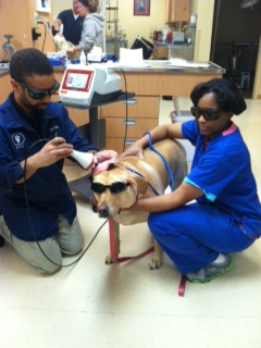 Laser Therapy Asheville Highway Animal Hospital Llc