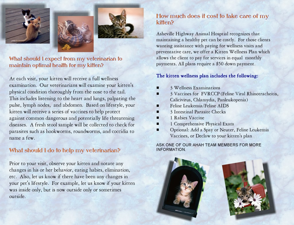 Kitten Wellness brochure inside